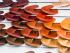 Kolekce barev pro podzim